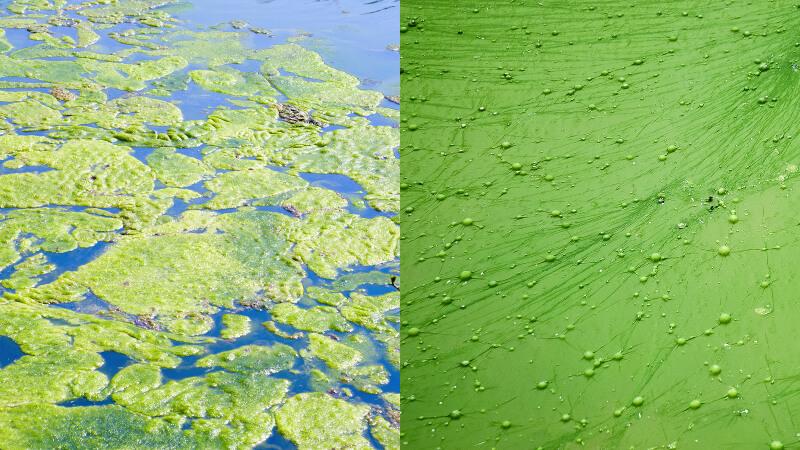algen-verwijderen