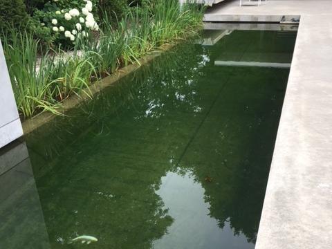 zwemvijver-met-zweefalgen-na-behandeling